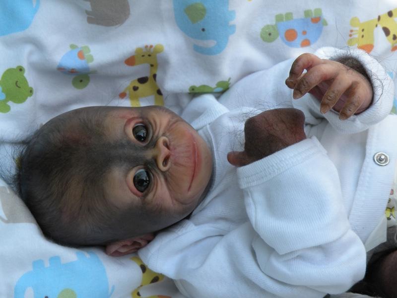 309100 Dollkit 16 Quot Orangutan Bindi 1 1 3 4